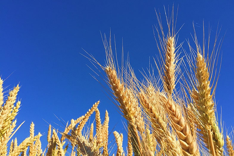 Is it Time to Go Gluten Free?